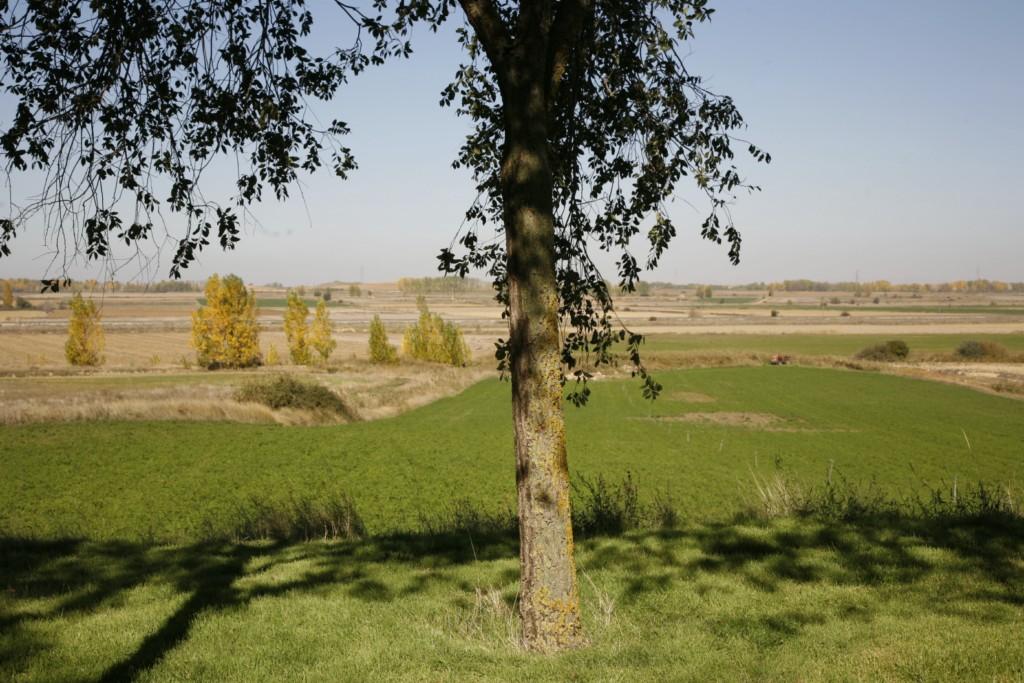 Amusco paisaje